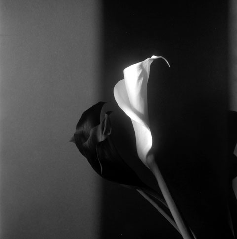 Series of photos named  Flowers: Arum in black and white, photo Paul Maurer